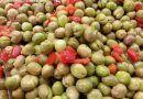 En Mi Cocina conocemos la receta de la Aceitunas Aloreñas con Denominación de Origen Protegida