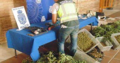 Localizan una plantación de marihuana oculta entre limoneros en Cártama y detienen a su propietario