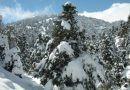 La Junta aprueba la propuesta para que la Sierra de las Nieves sea Parque Nacional