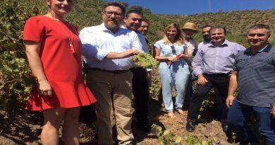 Hasta Roma se partirá el próximo jueves 19 para recoger la acreditación de la FAO a la uva pasa moscatel como patrimonio agrícola mundial