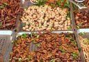 Saltamontes, grillos y gusanos en la dieta de los andaluces