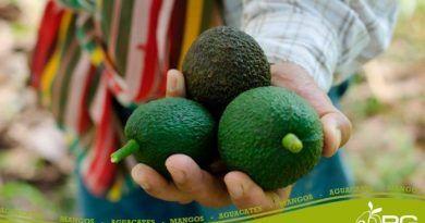 Reyes Gutiérrez elabora para Carrefour su primer guacamole sin conservantes