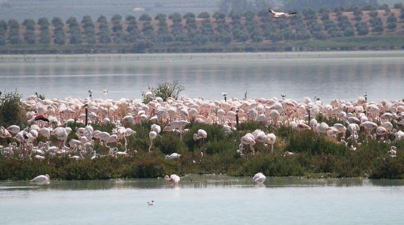 La Reserva Natural La laguna de Fuente de Piedra es la única zona húmeda temporal de Europa donde, una importante colonia de flamencos, se reproduce de forma regular.