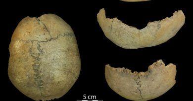 cráneo hallado en la cueva del toro, antequera