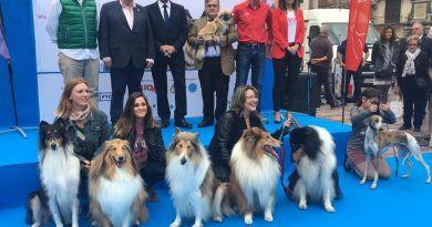 Los perros tomaron el sábado la plaza de la constitución como antesala al Salón Mi Mascota