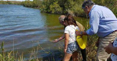 miles de peces se sueltan en la desembocadura del Guadalhorce