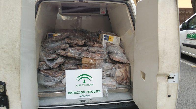 La pesca ilegal decomisa 3.730 kg de pulpo en Fuengirola y Atún Rojo en Málaga