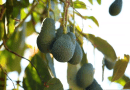 ¿Gastronomía tropical o tradicional? Conóce la cocina de Benamargosa