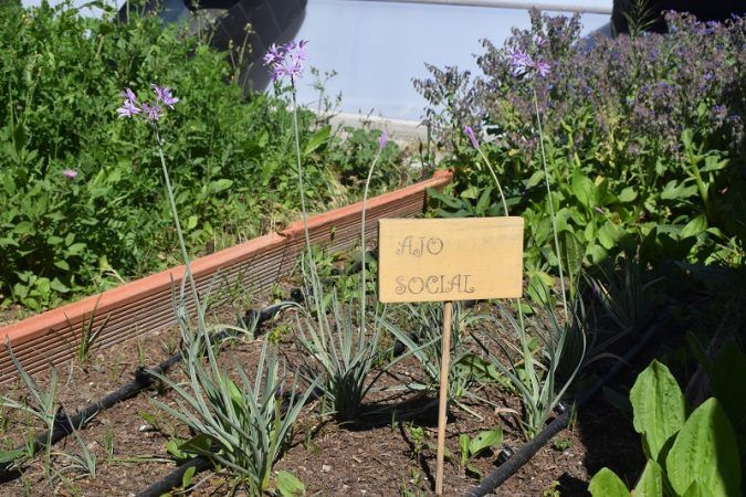 cultivando futuro, ecoherencia y la noria málaga