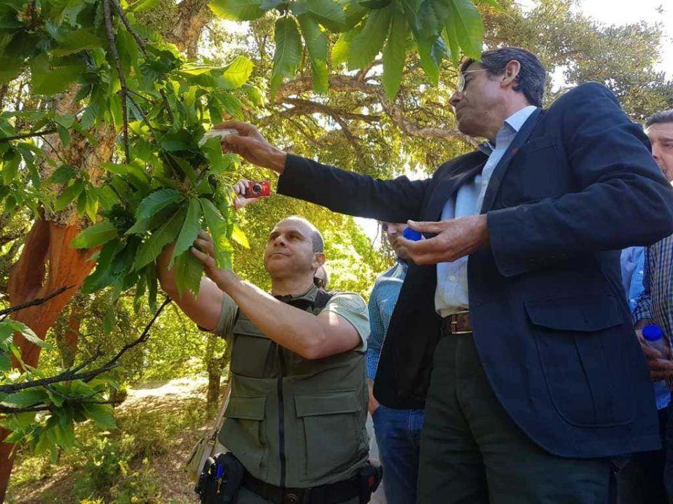suelta para la lucha contra la avispilla del castaño, provincia