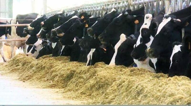 La Mesa de Sanidad Animal abordó también cuestiones relativas a la prevención de estas enfermedades